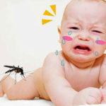 Nên làm gì khi có người nhà bị bệnh sốt xuất huyết?