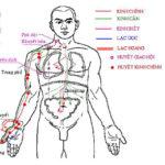 Tìm hiểu về học thuyết kinh lạc trong y học cổ truyền